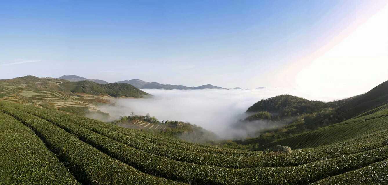 从地图空间分布上,我们可以看到: 南山茶厂位于尚田镇,宁波奉化尚田镇